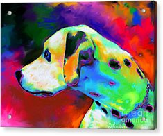 Dalmatian Dog Portrait Acrylic Print by Svetlana Novikova
