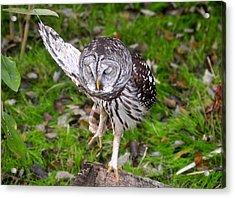 Dancing Owl Acrylic Print by David Lee Thompson