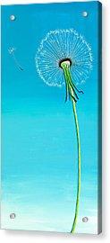 Dandelion Acrylic Print by David Junod