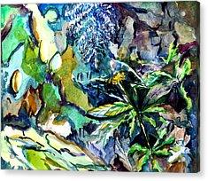 Dandelion Acrylic Print by Mindy Newman