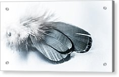 Dare To Fly Acrylic Print by Maggie Terlecki