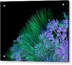Dark Mimosa Acrylic Print by James Granberry
