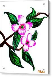 Darling Dogwood Llll Acrylic Print by Marsha Heiken