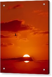 Dawn Flight Acrylic Print by DigiArt Diaries by Vicky B Fuller