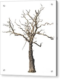 Dead Tree Acrylic Print by Amanda And Christopher Elwell