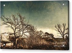 Dead Woodland Acrylic Print by Jorgo Photography - Wall Art Gallery