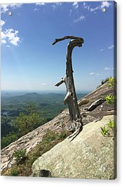 Decaying Tree At The Top Of Table Rock Trail South Carolina Acrylic Print by Kelly Hazel