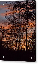 December Sunset In Frog Pond Woods Acrylic Print by Maria Suhr