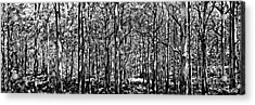 Deep Forest Bw Acrylic Print by Az Jackson