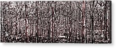 Deep Forest Sepia Acrylic Print by Az Jackson