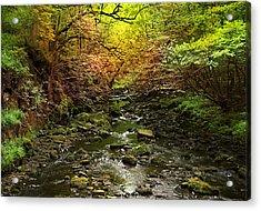 Deep In The Woods Acrylic Print by Svetlana Sewell