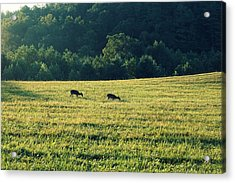 Deer At Dusk Acrylic Print by Laurie Perry