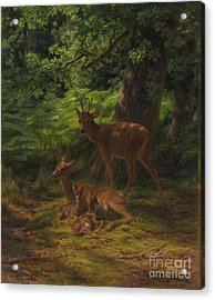 Deer In Repose Acrylic Print by Rosa Bonheur