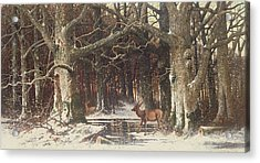 Deer In The Forest Acrylic Print by G Schneyder