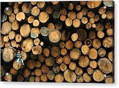 Deforestation Acrylic Print by Gaffuri Mario