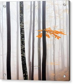 Delicate Forest Acrylic Print by Evgeni Dinev