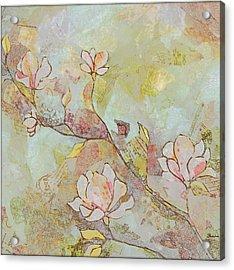 Delicate Magnolias Acrylic Print by Shadia Zayed