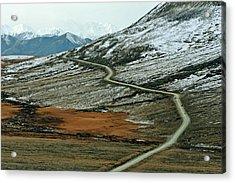 Denali Road 3 Acrylic Print by Marty Koch