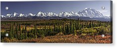 Denali Tundra Acrylic Print by Ed Boudreau