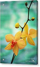 Dendrobium Acrylic Print by Allan Seiden - Printscapes