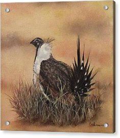 Desert Sage Grouse Acrylic Print by Roseann Gilmore