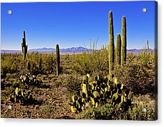Desert Spring Acrylic Print by Chad Dutson