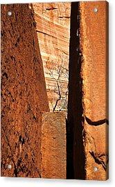Desert Vise Acrylic Print by Mike  Dawson
