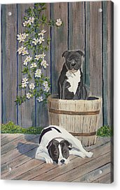 Devilish Duo At Rest Acrylic Print by Ally Benbrook