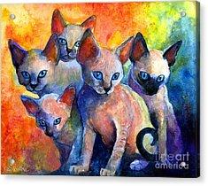 Devon Rex Kitten Cats Acrylic Print by Svetlana Novikova