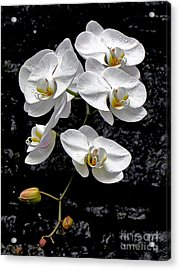 Dew-kissed Cascading Orchids Acrylic Print by Sue Melvin