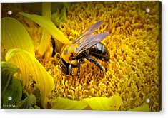 Diligent Pollinating Work Acrylic Print by Matt Taylor