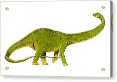 Diplodocus Acrylic Print by Michael Vigliotti