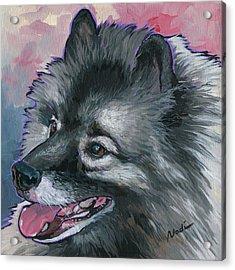 Dixie Acrylic Print by Nadi Spencer