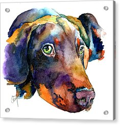 Doberman Watercolor Acrylic Print by Christy  Freeman
