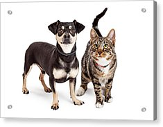 Dog And Cat Standing Looking Up Together Acrylic Print by Susan  Schmitz