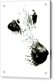 Dog Face Acrylic Print by Frank Tschakert
