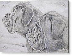 Dogue De Bordeaux Acrylic Print by Keran Sunaski Gilmore
