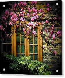 Dogwood In The Spring Acrylic Print by Joyce Kimble Smith