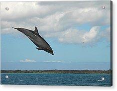 Dolphin Jump Acrylic Print by Alan Lenk