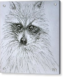Don's Racoon Acrylic Print by Pete Maier
