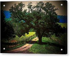 Down The Lane Acrylic Print by Joyce Kimble Smith