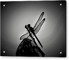 Dragon Fly Acrylic Print by William Jones