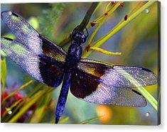 Dragonfly Acrylic Print by Tony Ramos