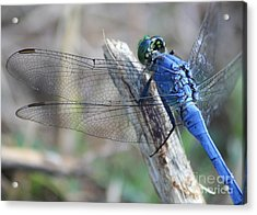 Dragonfly Wing Detail Acrylic Print by Carol Groenen
