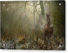 Dream Forest Acrylic Print by Dorota Kudyba