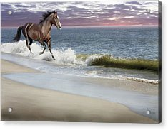 Dreamer On The Beach Acrylic Print by Barbara Hymer