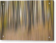 Dreamy Forest Acrylic Print by Tom Mc Nemar