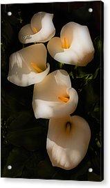Dreamy Lilies Acrylic Print by Mick Burkey