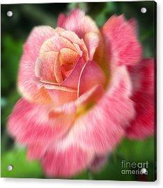 Dreamy Rose Acrylic Print by Jeannie Burleson