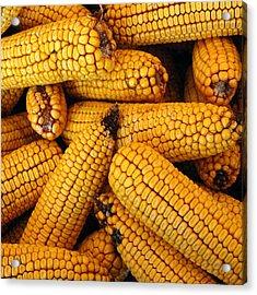 Dried Corn Cobs Acrylic Print by LeeAnn McLaneGoetz McLaneGoetzStudioLLCcom